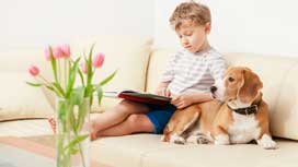 How to have a pet and maintain a clean house